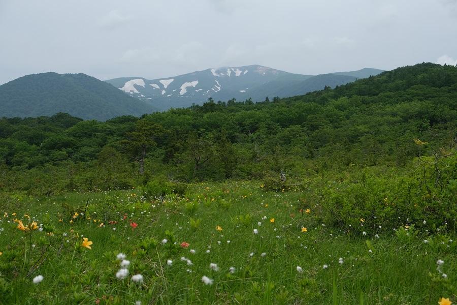 栗駒山6月の残雪の風景写真世界谷地原生花園自然歩道から撮影