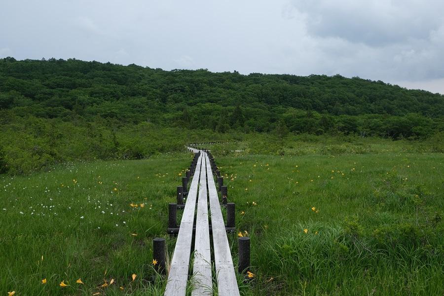 世界谷地原生花園自然遊歩道のニッコウキスゲとわ菅の共演の6月の写真画像