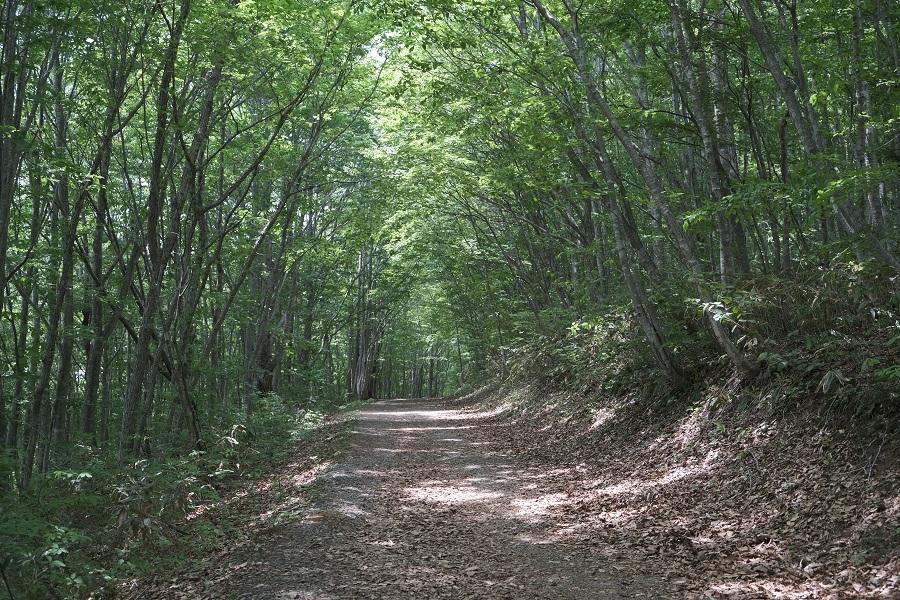 世界谷地原生花園への散策道路