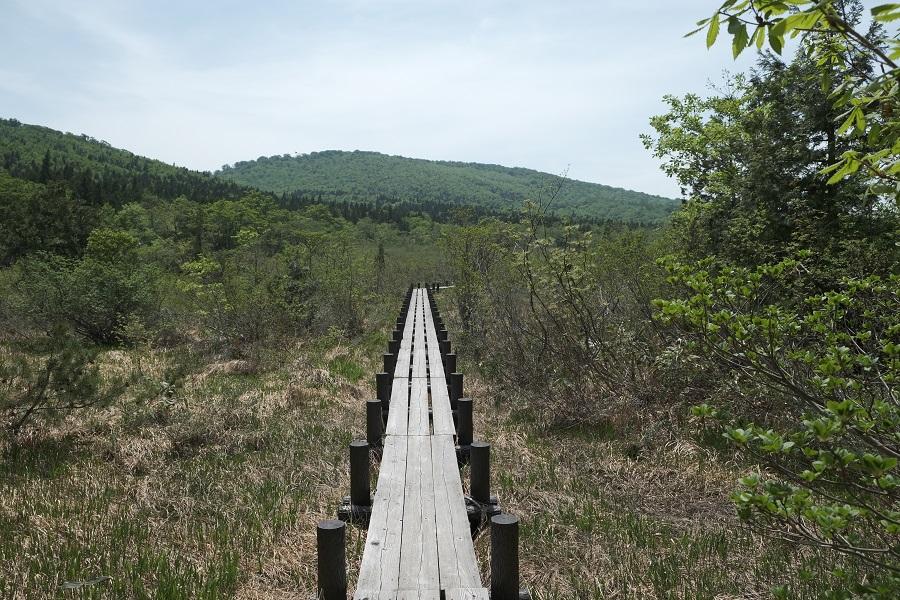 世界谷地原生花園への散策木道の全景写真