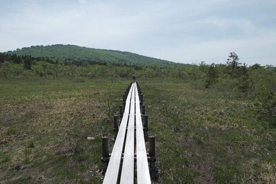世界谷地原生花園のワタスゲの群生を木道から散策して見学する