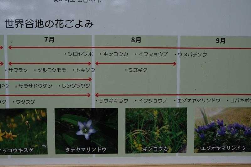 世界谷地原生花園遊歩道の紹介版