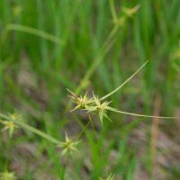 世界谷地原生花園のトレッキングコースの植物と花の写真