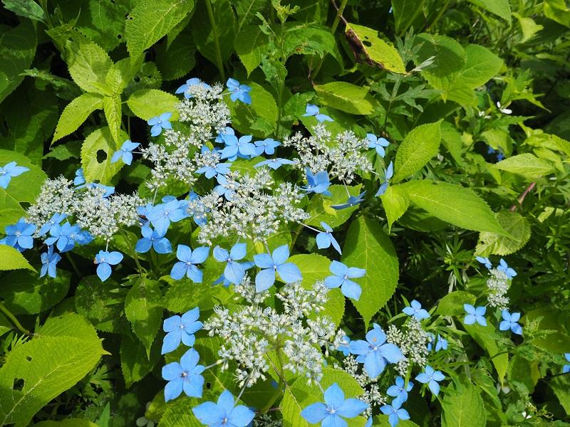 世界谷地遊歩道の7月の花が咲いてる風景写真