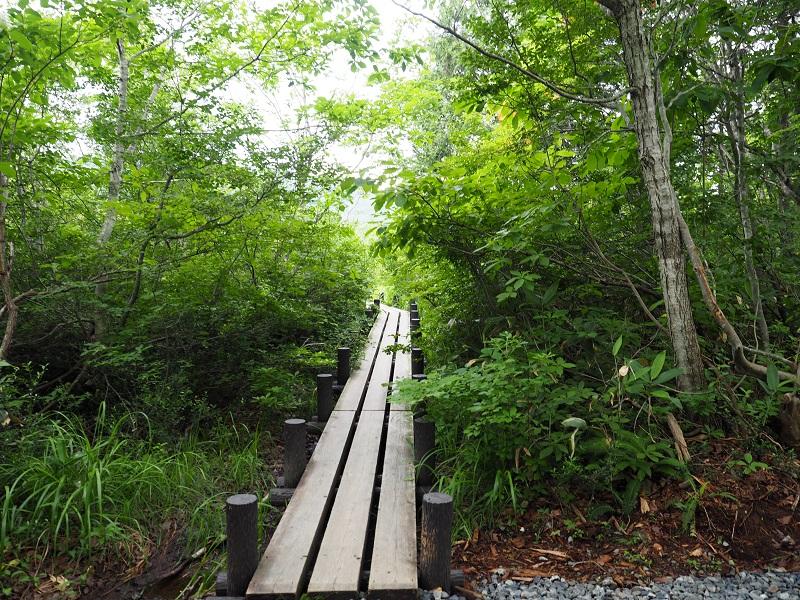 世界谷地遊歩道の木道の風景写真