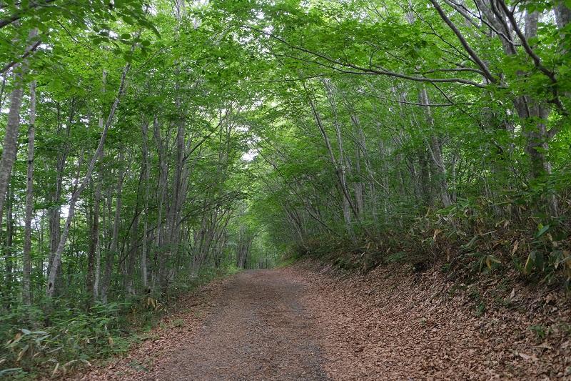 世界谷地原生花園に行くトレッキングコースの遊歩道
