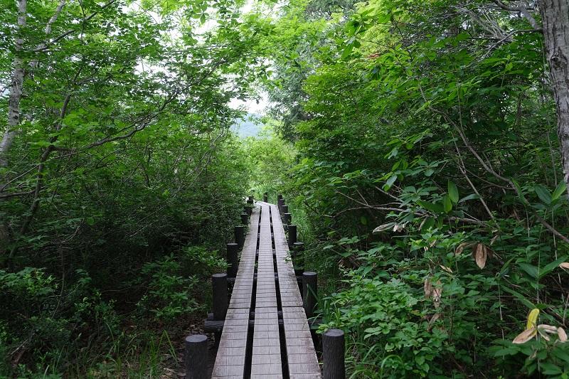 世界谷地原生花園の木道の入り口の風景写真