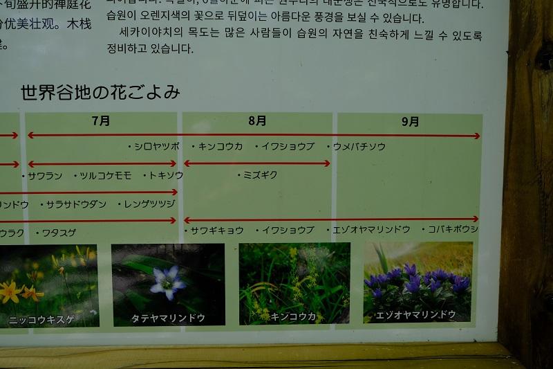 世界谷地原生花園の高山植物カレンダー