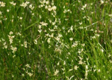 世界谷地原生花園の8月の風景