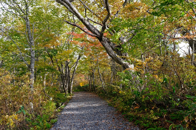 世界谷地原生花園の遊歩道の入り口付近の紅葉の写真